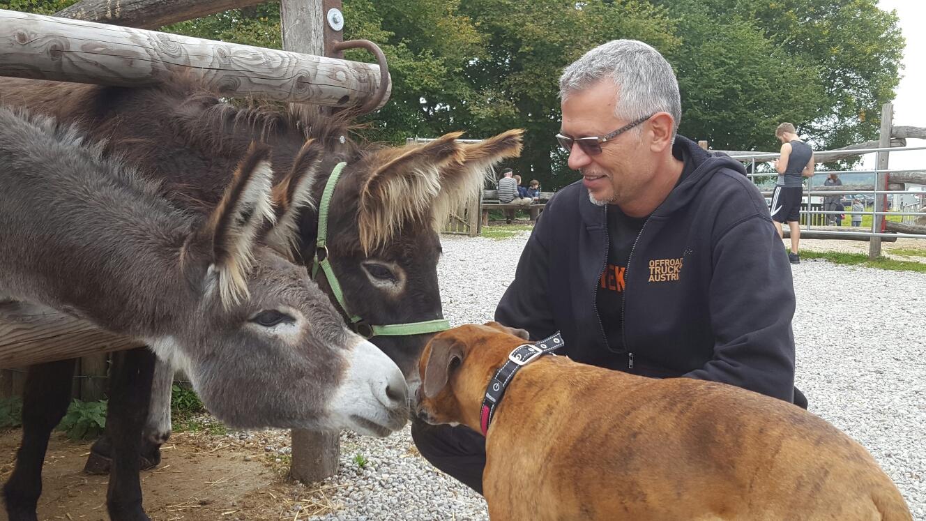 Auf der Kamelfarm gibt es auch Esel!