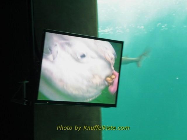 Am Bildschirm sieht man das Helmkamerabild des Tauchers