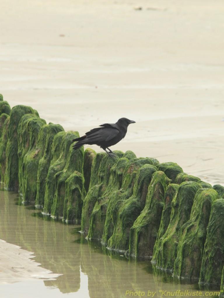 ...am Strand.
