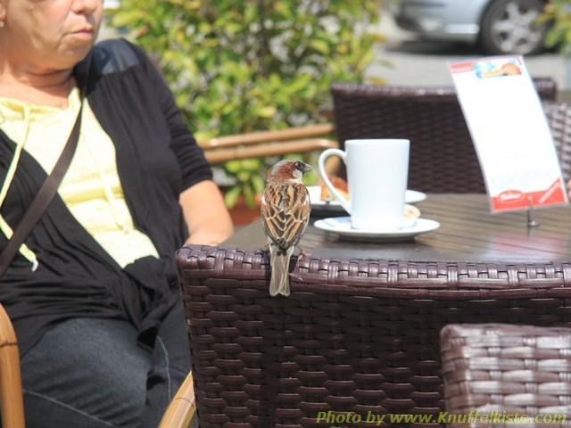 im Cafe in Lübbenau - freche Spatzen...