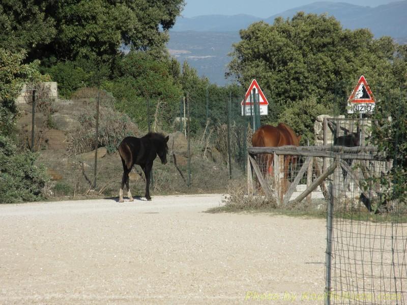 Die Pferde laufen nach Hause...