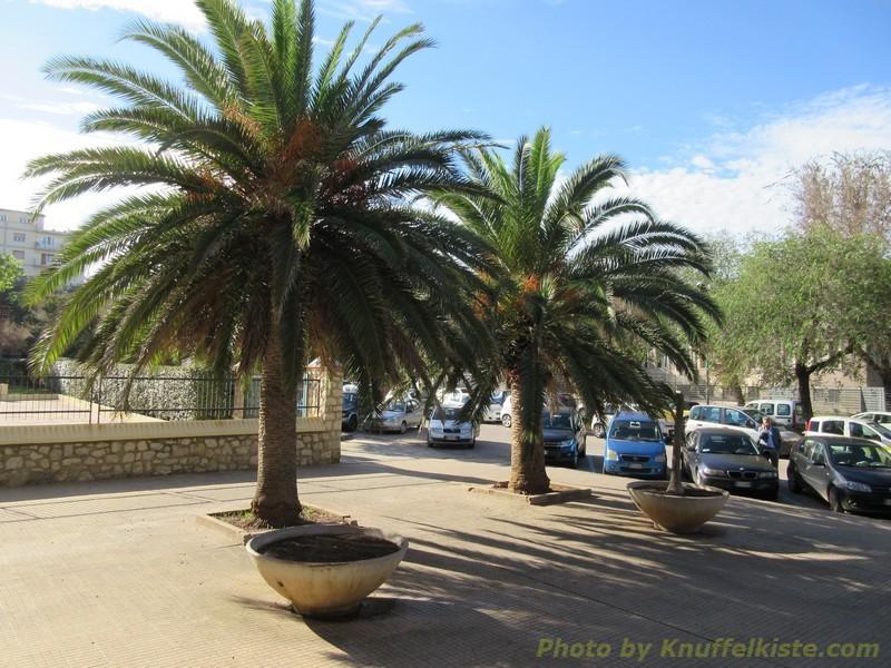 Palmen vor der Kirche