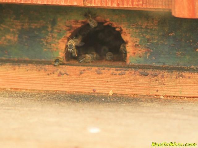 die fleisigen Bienen...