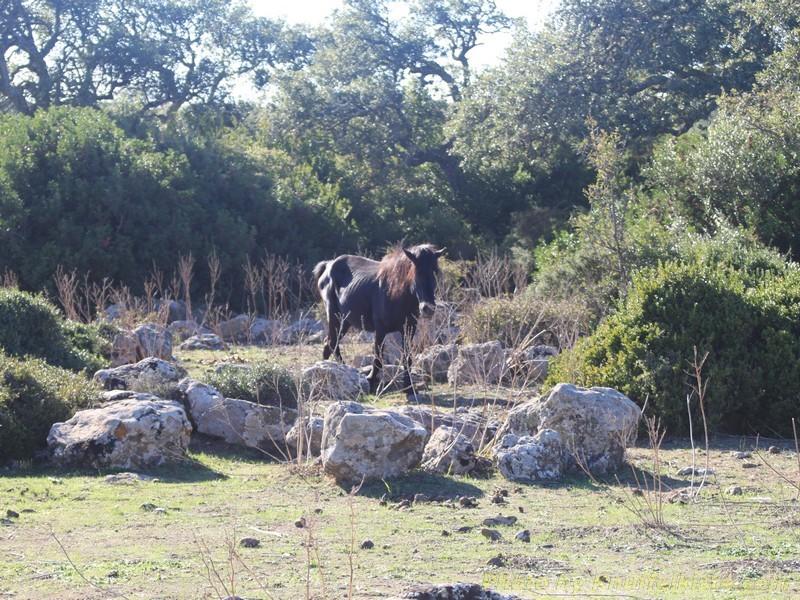 die ersten Pferde...