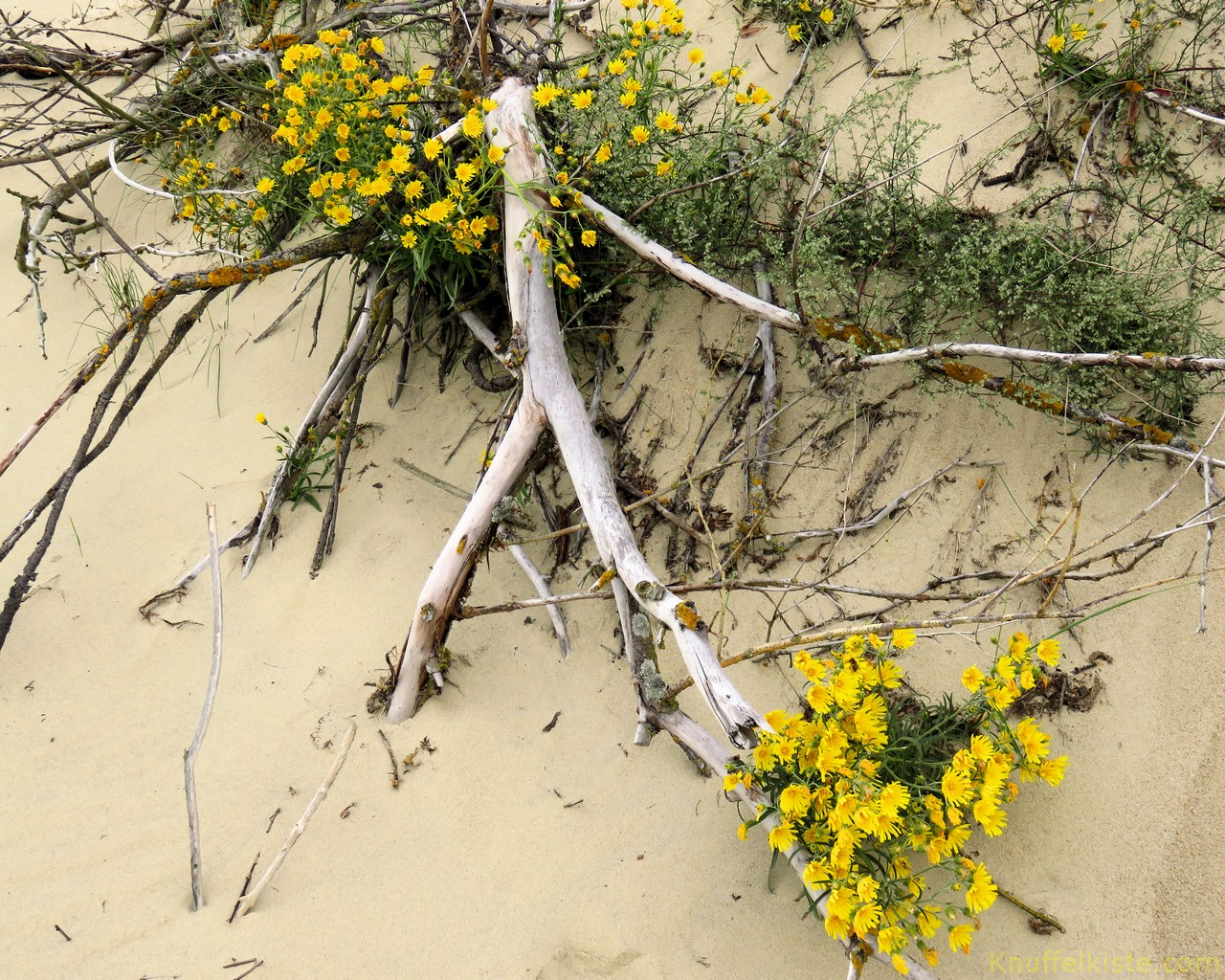 sogar Pflanzen wachsen im Sand!