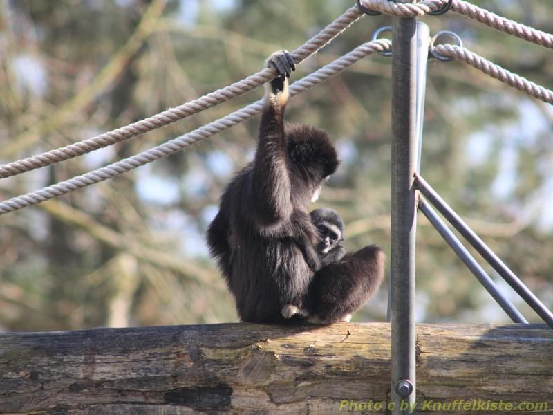 Wow!! ein Affenbaby dieses Jahr!!!