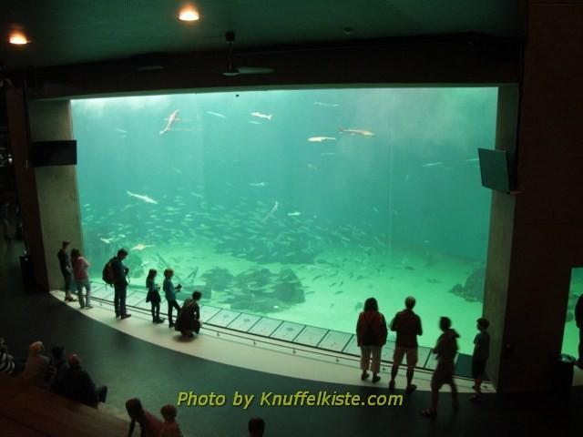Das Nordsee Aquarium Becken 4,5 Mio. Liter Inhalt