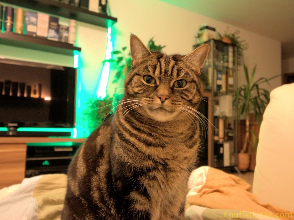"""unsere Katze """"Vreni""""-Die Wächterin des Schatzes!"""
