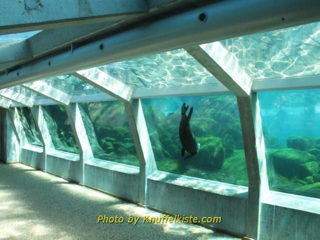 Tunnel unter dem Seerobben Aussenbecken