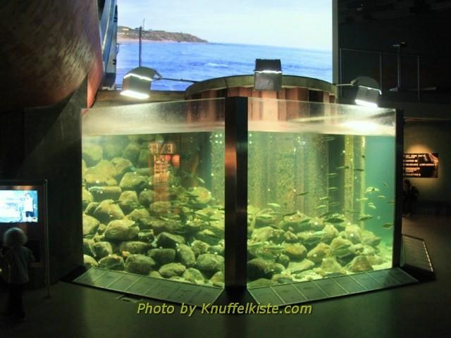 kleineres Aquarium