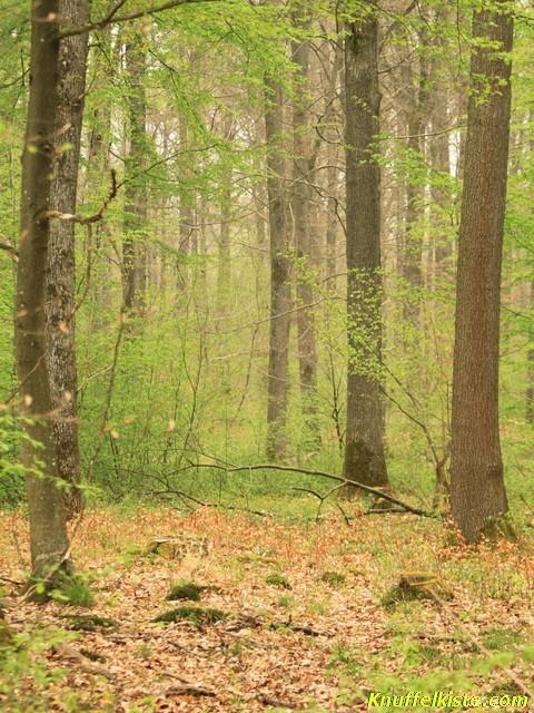 Heilbronner Stadtwald