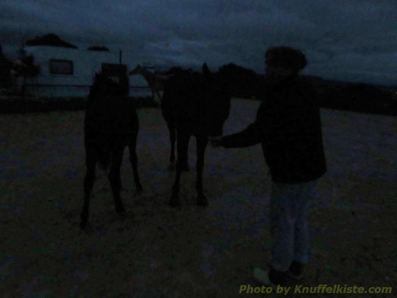 in der Nacht-Gabi kann Wildpferde streicheln-weil Sie sie füttert!