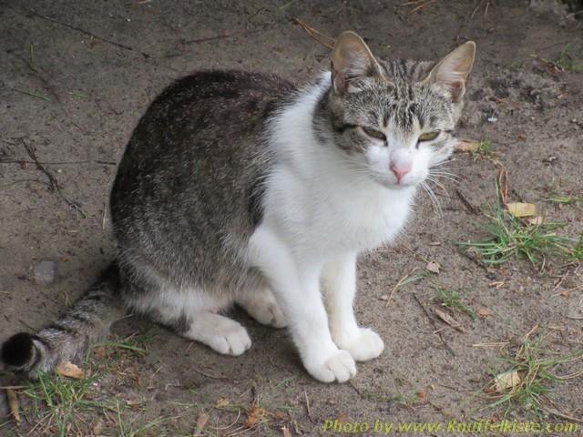 ...einer jungen frischen Katzenmutti!!wie wir Tage später sahen...