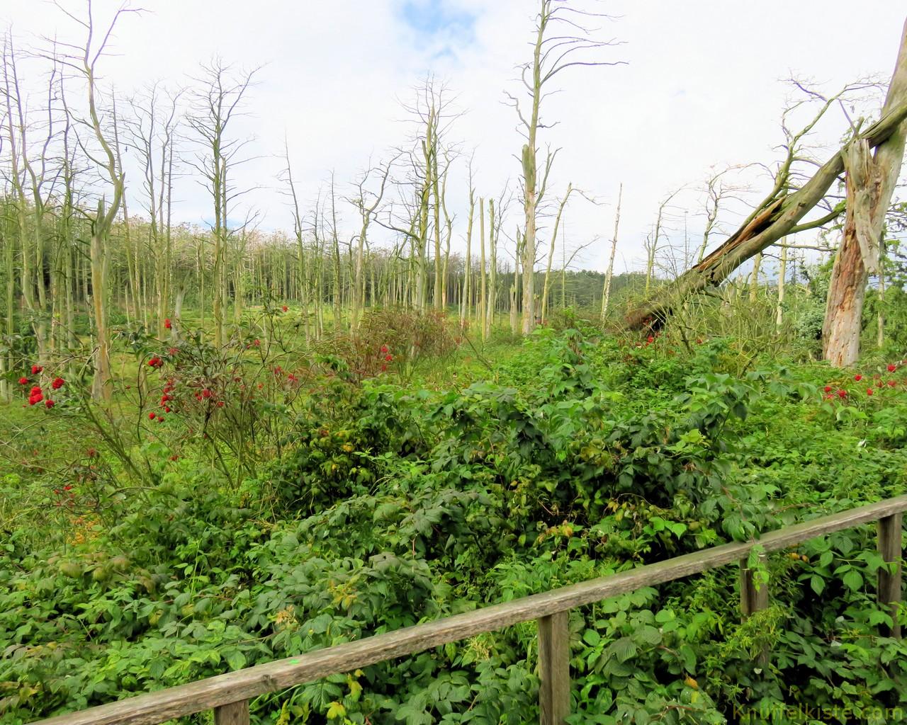 der Kot zerstört auf Dauer die Bäume!