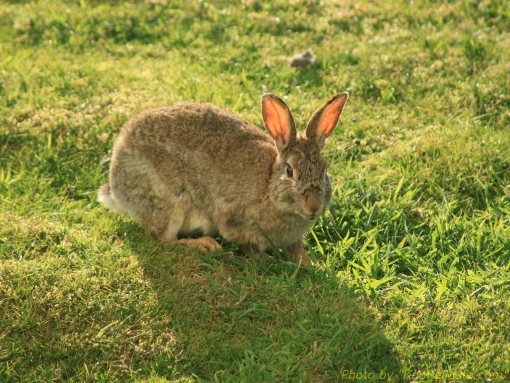 """und wieder """"Meine Kaninchen""""..."""