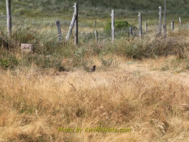 eine Krähe im hohen Gras, 5 Meter vom Womo entfernt