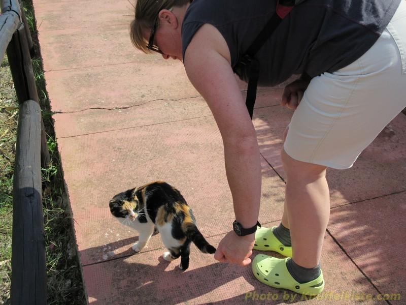 Gabi hat wieder ne Katze gefunden...