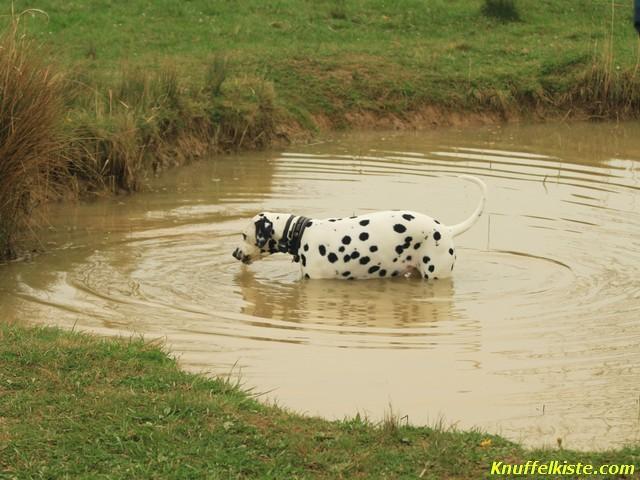 der kleine Teich auf dem Gelände