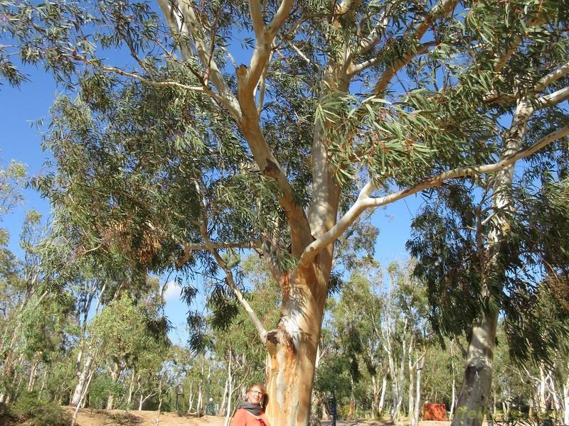 schöne Bäume hier auf dem CP.