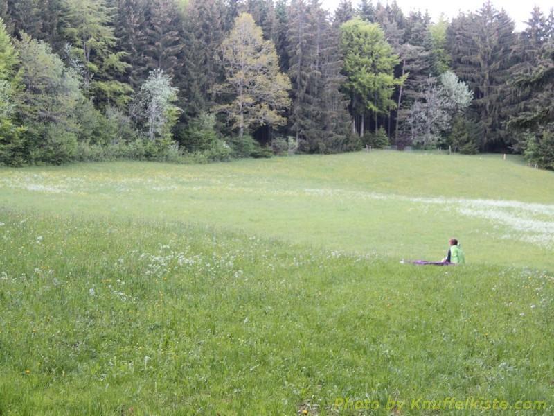 am Waldrand, ganz alleine.