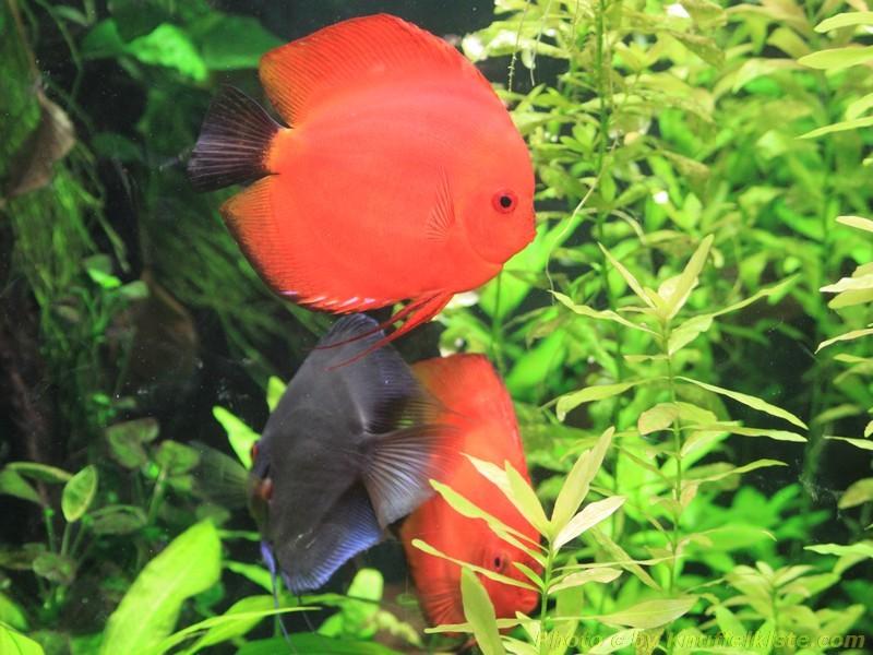 Fische im kleinen Aquarium Bereich des Mundenhof´s