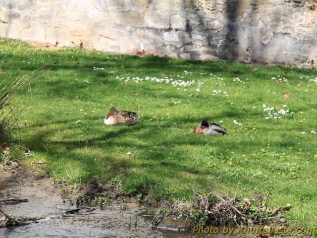 Die Enten geniessen die Sonne