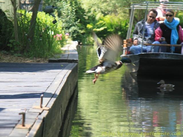 Ente haut ab - zuviel Rummel hier!