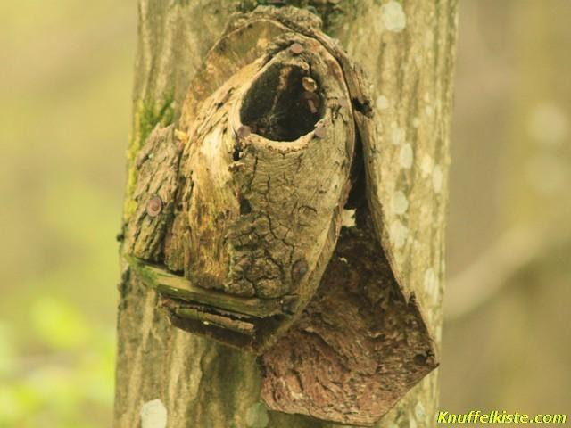 Niestkasten am Baum