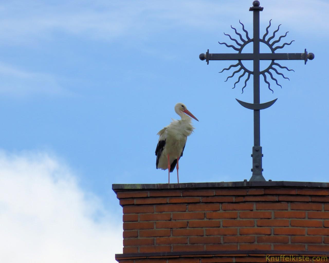 frecher Storch auf der modernen Kirche am Berg der Kreuze