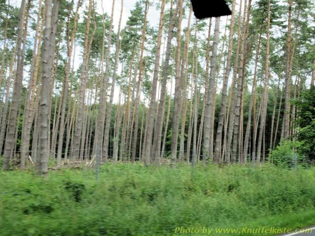Alter Wald auf Usedom