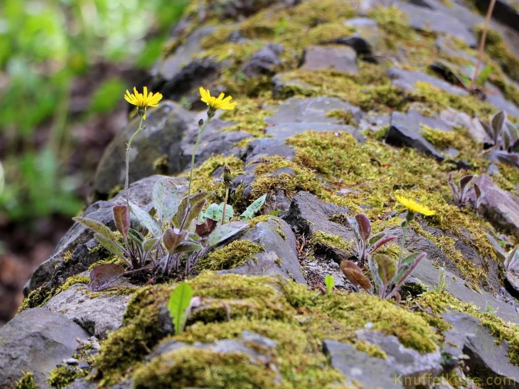 Moosmauer