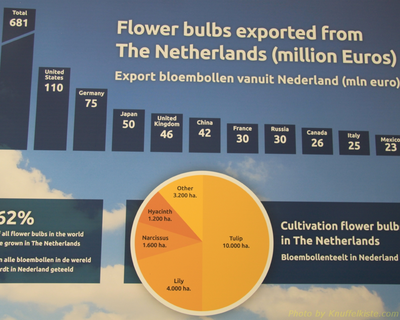 62% aller Tulpenzwiebeln der Welt kommen aus den Niederlanden!