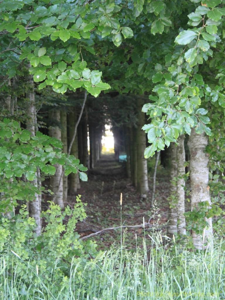 der Wald nette Perspektive