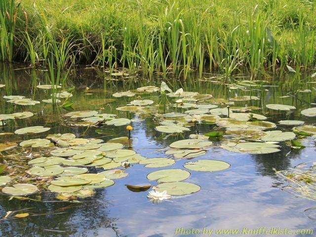 Natur pur - Biosphärenreservat Oberer und unterer Spreewald