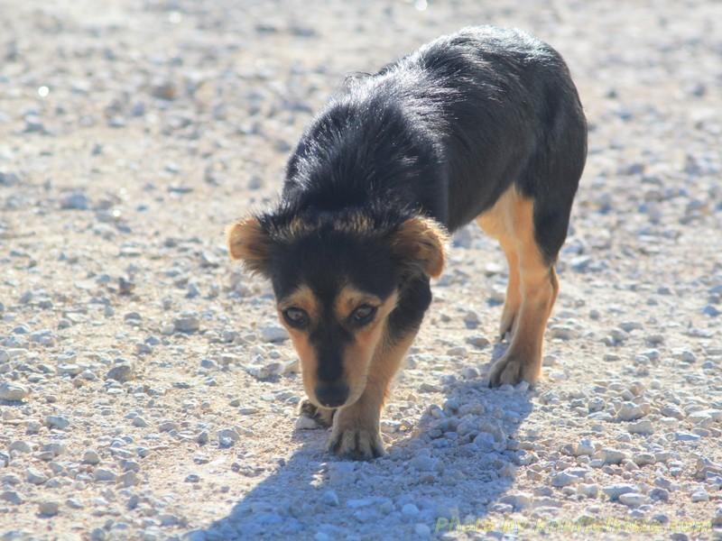 Kleiner Hund auf dem Parkplatz...