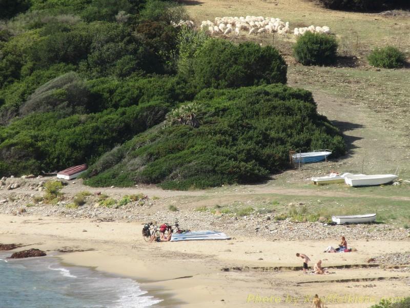 nochmal der Strand mit Schafherde