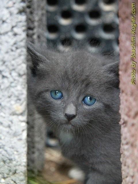 Arme kleine Katze,so traurig...
