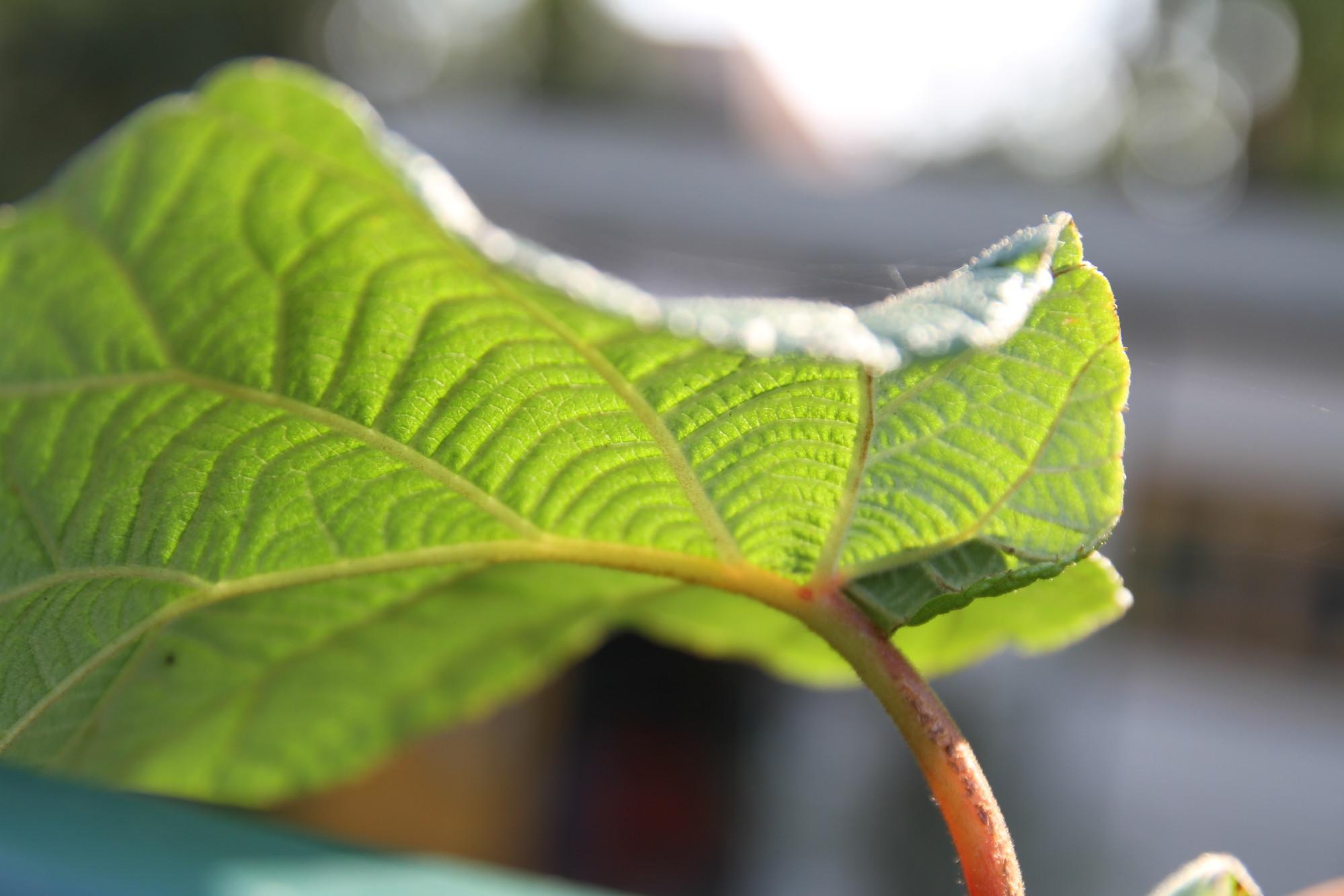 Outdoorküche Mit Spüle Reparieren : Produktübersicht gasgrills röttig in neuwied ihre kompetente
