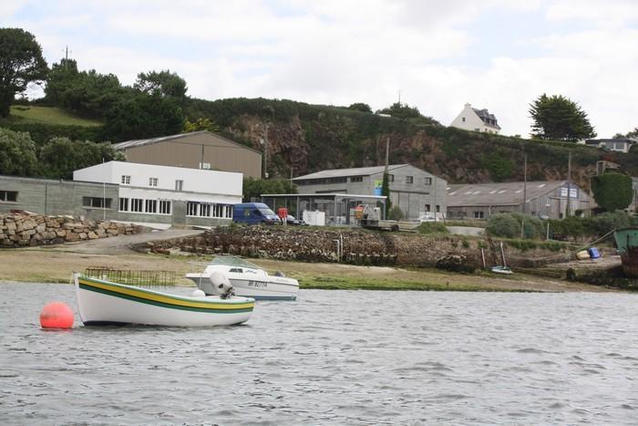 Beg ar Vihl oyster plant