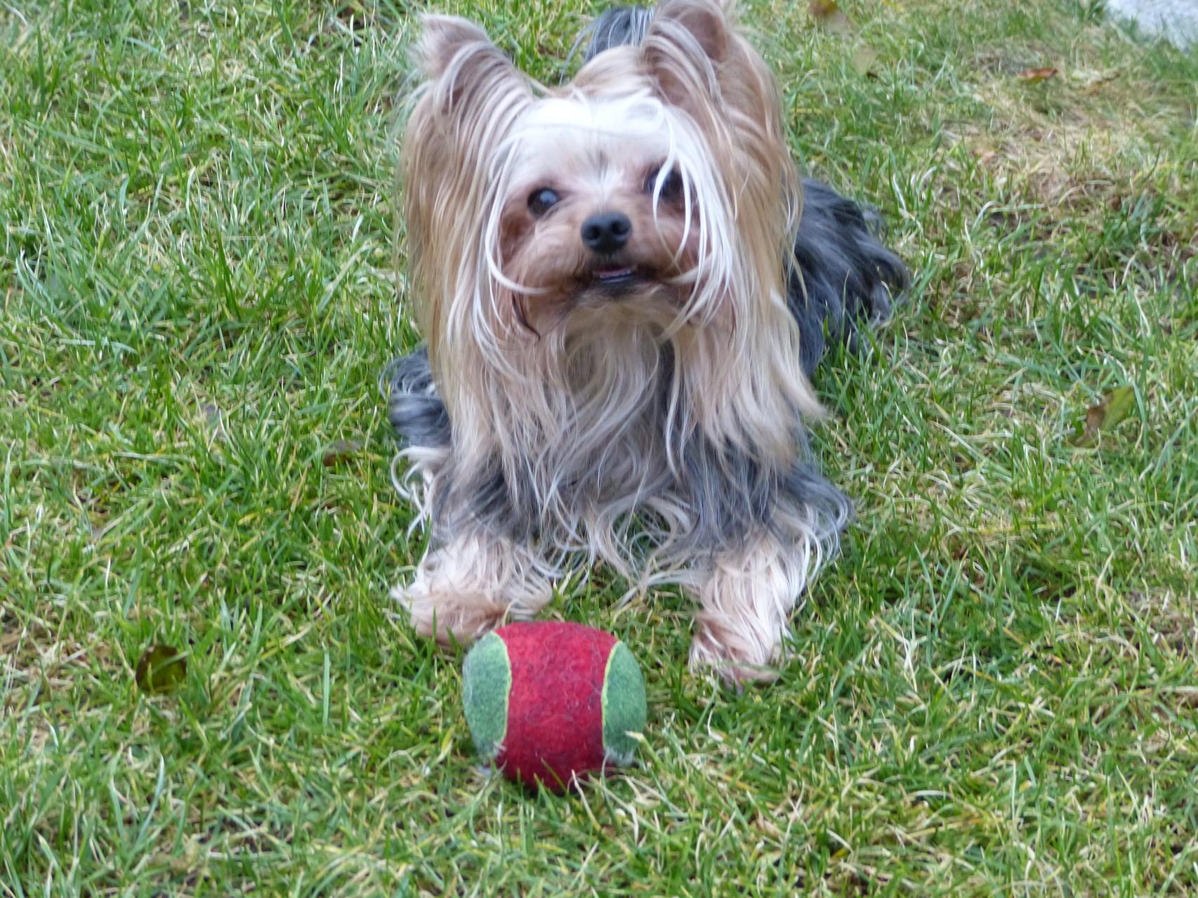 Nicht ohne meinen Ball
