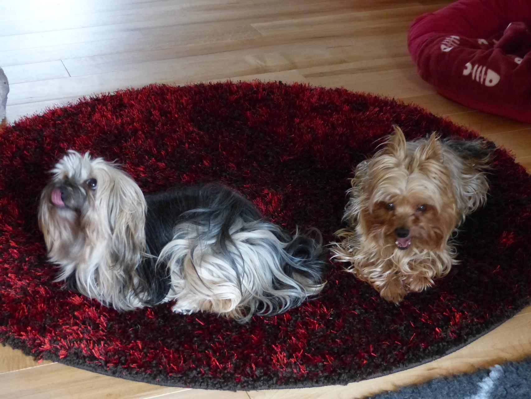 Pia und Leon auf ihrem Lieblingsteppich :-)