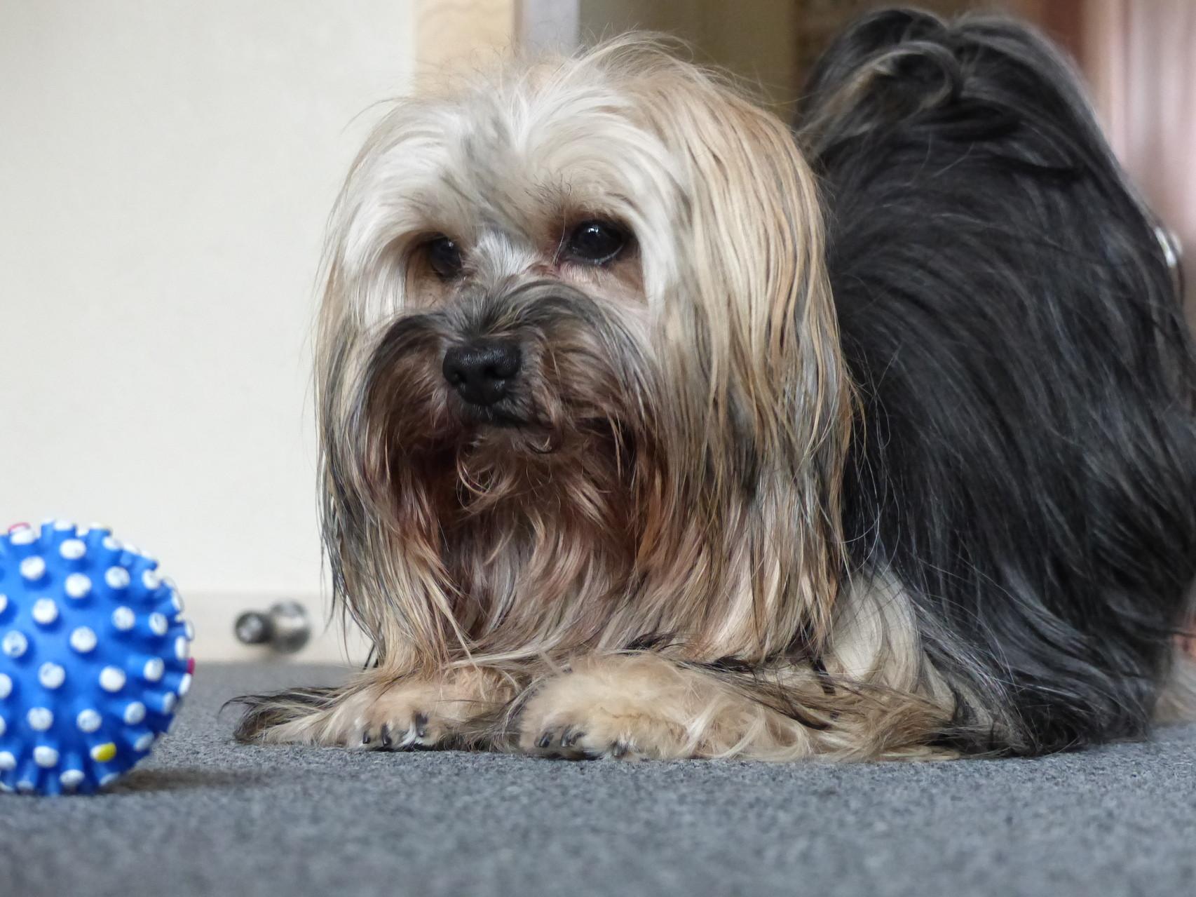 Pia und ihr Ball