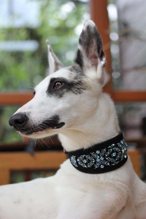ja, unsere liebe MO hat auch ein Perlenhalsband ergattert