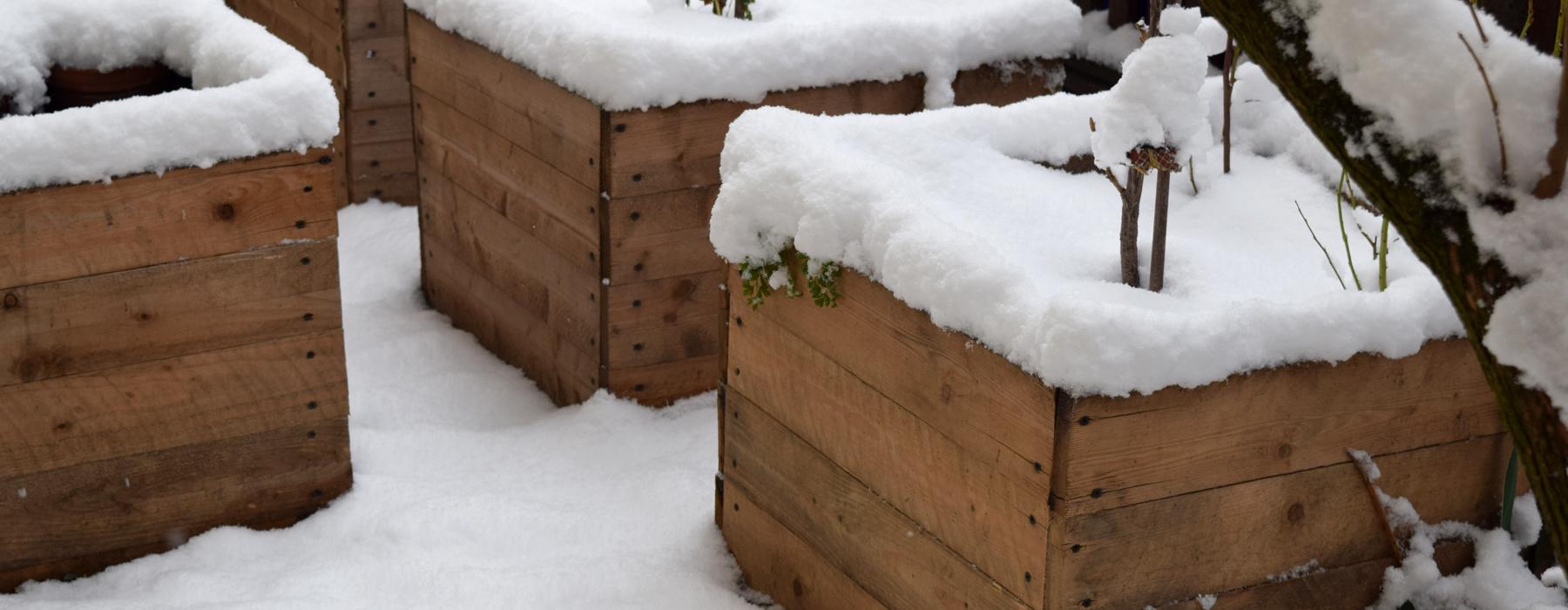 de curae   tiny urban garden in wintertime – Thorsten Schlesinger