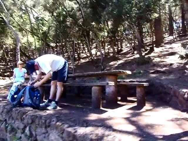 Holz Tische und Bänke sind unter die Baumheide und die Pinien Bäume gebaut