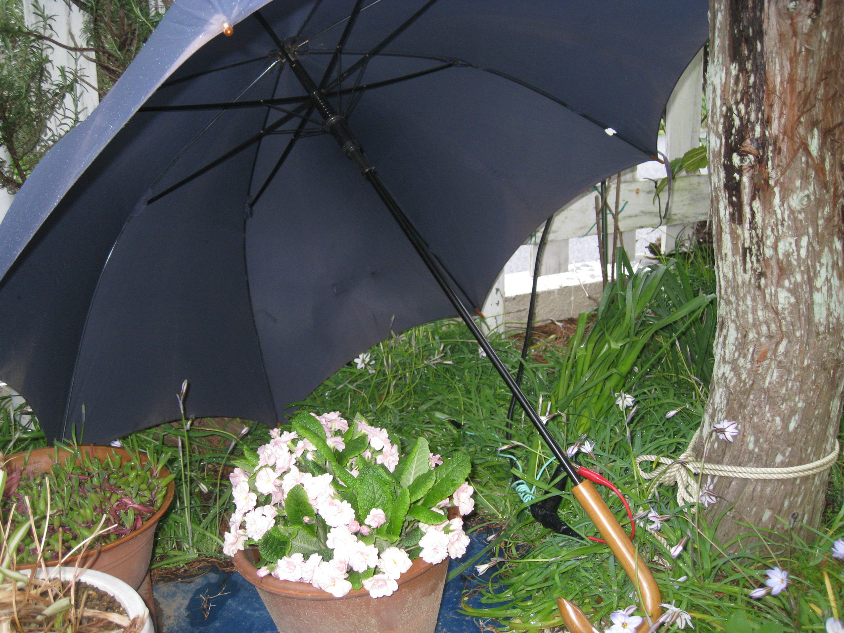 雨傘アンテナ