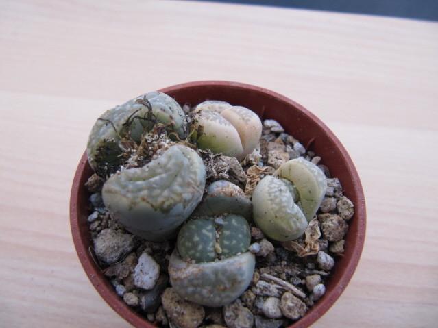 réf:34-1 photo prise le 04-11-2012