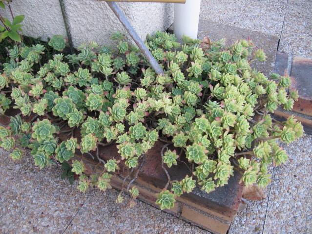 réf:1570-1  photo prise le 08-09-2012