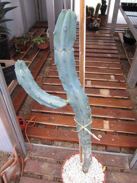 réf:350-1  photo prise le 23-10-2010