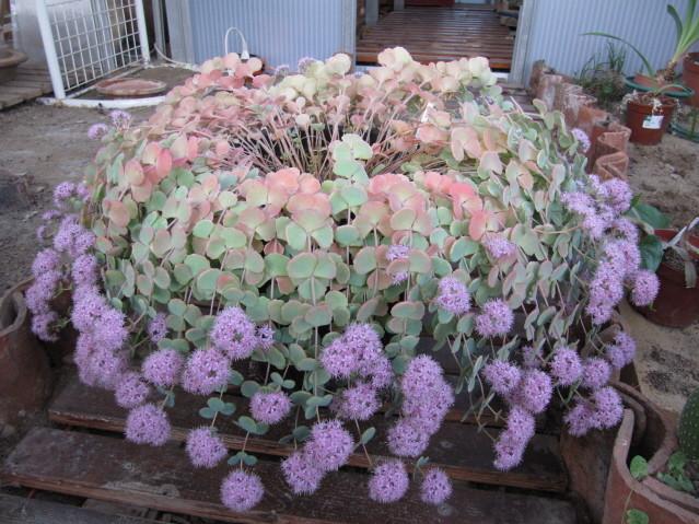 réf:1571-1  photo prise le 22-10-2011